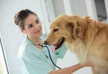 Pour vos animaux : il existe aussi des vétérinaires à domicile